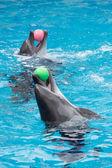 Dos delfines jugando — Foto de Stock