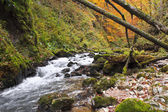Autumn colors of a waterfall — Stockfoto