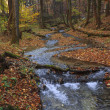 Autumn colors in a creek — Stock Photo