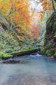 Galbena canyon autumn — Stock Photo