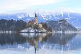 Winter landscape of Bled Lake — Stock Photo