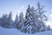 Snowy landscape in the mountains  — Stock Photo