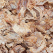 Dried squid texture backgroud — Stock Photo