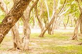 Plant tree in green garden — Stock Photo