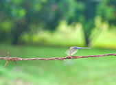 Dragon fly on old barb wire on green background — Stock Photo