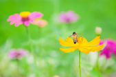 Yellow flower and bee — Stock Photo