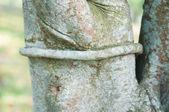 Closed up vine around plant tree — Stock Photo