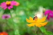 Bee on pollen of yellow flower and sun light — Stock Photo