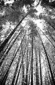 Bosque nevado — Foto de Stock
