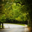 Asphalt winding curve road in a beech forest — Stock Photo #22419053