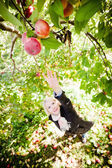 Girl reaching for a branch with apples — Stock Photo