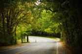 ブナ林の巻線の曲線道路をアスファルトします。 — ストック写真
