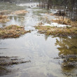 The flooded forest - Stock Photo