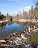 Woodland pond — Stock Photo