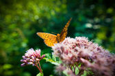 Close up of a butterfly on a flower — Stock Photo