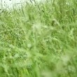 Wind in a field - Stock Photo