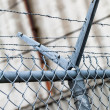 Stock Photo: Outdoor Fence Detail of Sharp Barbwire Installation