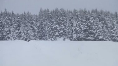 Lonely Man Snowmobiling in The Powder Snow — Vidéo