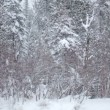Big Snowflakes falling down during a Winter Day — Stock Video