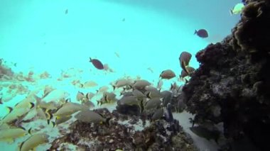 Underwater Caves Exploration in Tropical Ocean, San Andres, Colombia — Stock Video