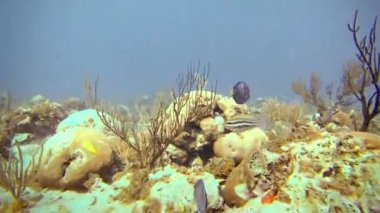 Lots of Tropical Fishes Underwater in San Andres, Colombia — Stock Video