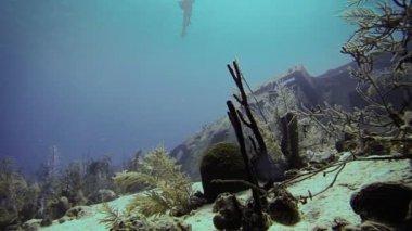 Freediver swimming Deep Underwater — Vídeo Stock