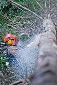 Professioneel houthakker snijden een grote boom in het forest — Stockfoto