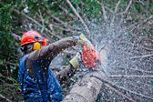 Professional Lumberjack Cutting a big Tree in the Forest — Stock Photo