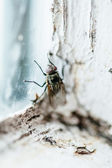 Nasty Housefly in a Window — Stock Photo