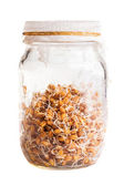Sprouting Weat Seeds Growing in a Glass Jar — Stock Photo