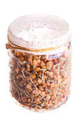 Top View of Sprouting Lentils Growing in a Jar — Stock Photo