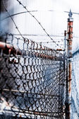 Barb Wire and Fence — Stock Photo