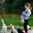 Young Girl Feeding Ducks. Pekin Duck makes a Nice Catch of a Piece of Bread. — Stock Photo #23070432
