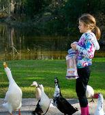 Young Girl Feeding Ducks. Pekin Duck makes a Nice Catch of a Piece of Bread. — Stock Photo
