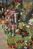 Florist display in Barcelona. Spain — Stock Photo