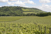 North Downs and vineyard. Surrey. England — Stock Photo