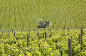 Tractor spraying vineyard. Surrey. England — Stock Photo