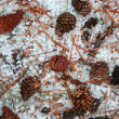 Pine cones on snow  — Stock Photo
