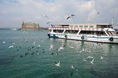 Seagull in the Bosporus, istanbul — Stock Photo