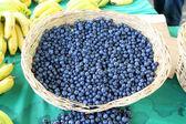 Harvest of fresh acai berries — Stock Photo