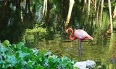 Pink flamingo — Stock Photo
