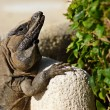 The lizard is basked in the sun — Stock Photo