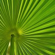 Leaf from a palm tree — Stock Photo