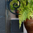 Decorative fern in ceramic pot — Stock Photo #29767703