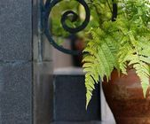 Decorative fern in a ceramic pot — Stock Photo