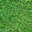 Green grass with dew for a background — Stock Photo