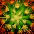 Abstract flower of a cactus — Stock Photo