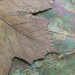 Texture of dried maple leaf — Stock Photo #41083881