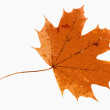Maple leaf on white background — Stock Photo #41217391