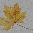 Transparent maple leaf on a concrete surface — Stock Photo #41218709